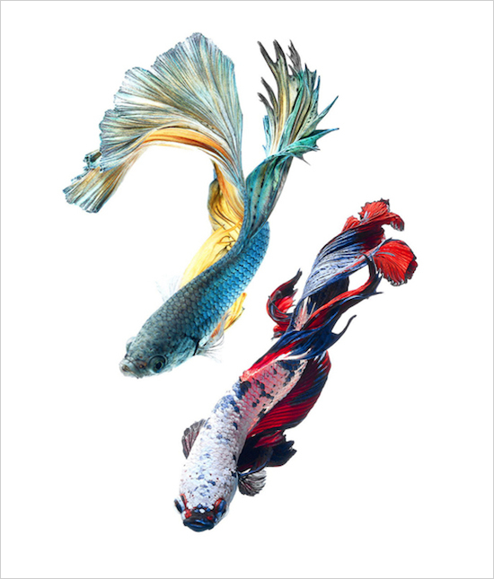 fish_11