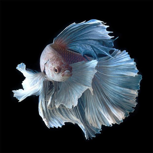 fish_6