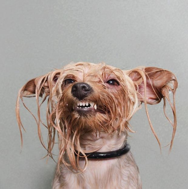 wetdog12