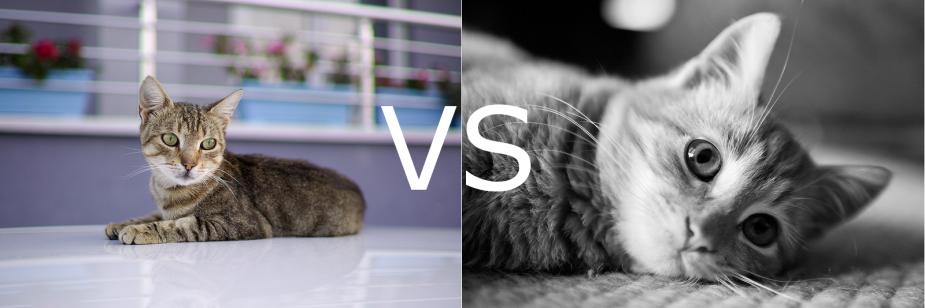 Farbe_vs_SW