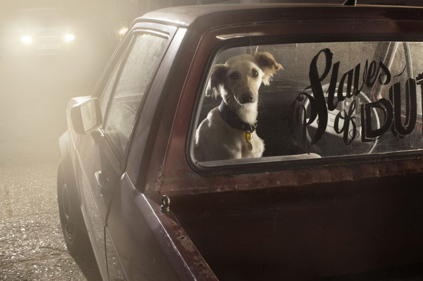 The Silence of Dogs in Cars by Martin Usborne (16)