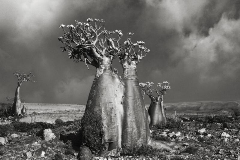 Desert-Rose-Wadi-Fa-Lang-copy-Beth-Moon