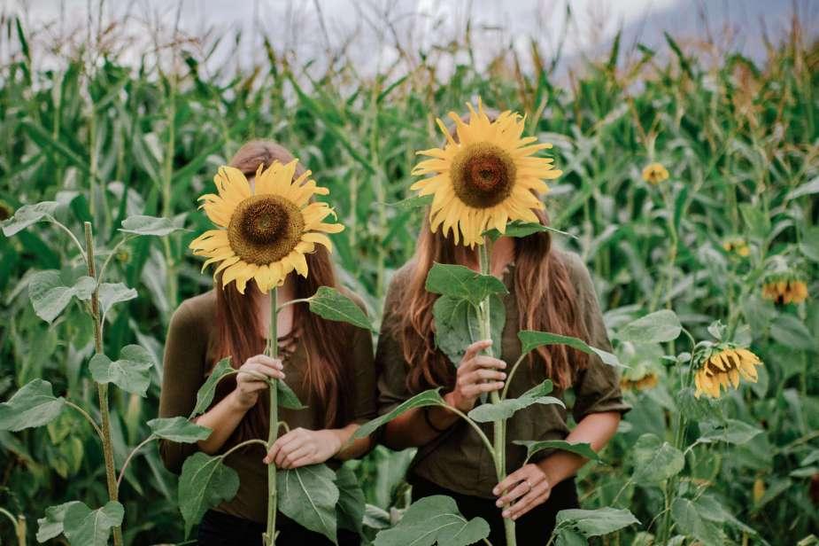 sonnenblumen-9342