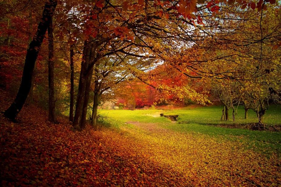 autumn-1072827_1280.jpg
