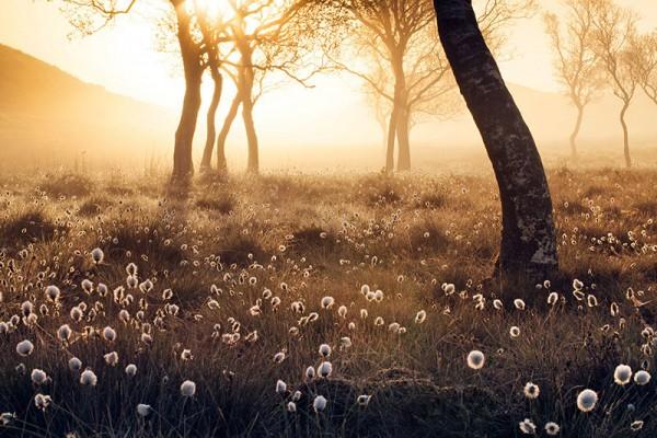 APOY-2016-meadow-Stuart-Stevenson.jpg