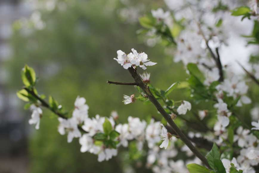 Fotospaziergang_Frühlingspark-10-min