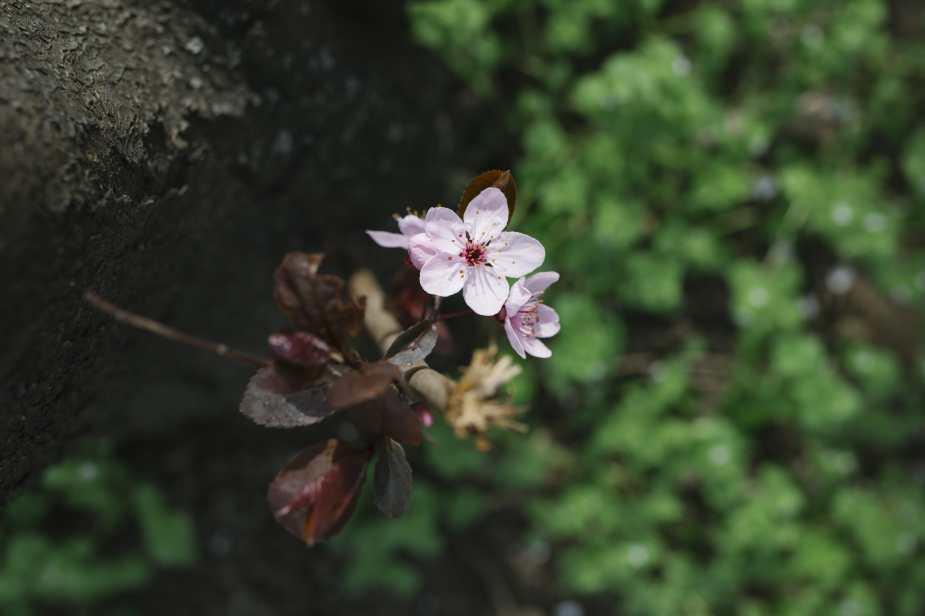 Fotospaziergang_Frühlingspark-13-min