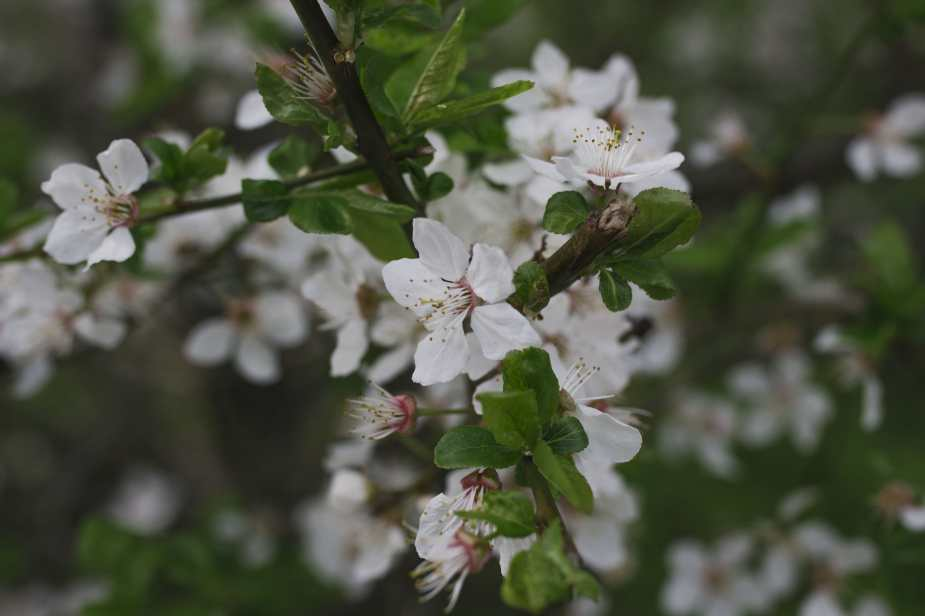 Fotospaziergang_Frühlingspark-9-min
