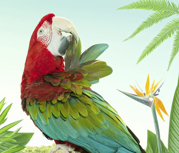 BIRDS-Zack-Seckler-07