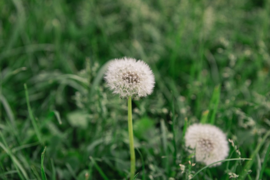 Objektivtest_Blumen-3-min