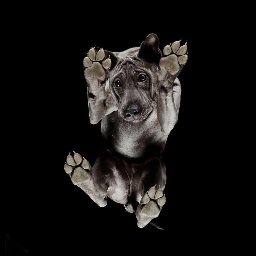 7-Under-dogs-58ec83b67bc67__880