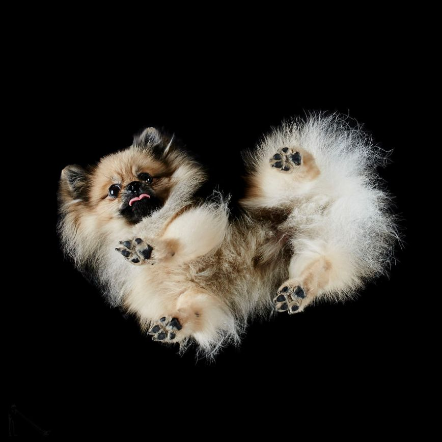 9-Under-dogs-58ec83bd5b6a9__880