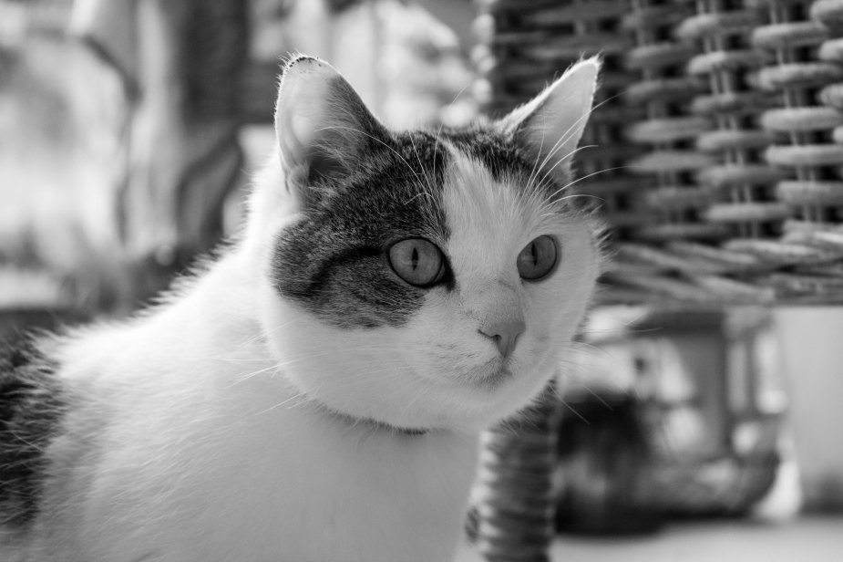 Fotospaziergang_Katze-1